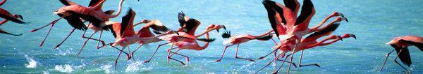 Karibik Angebote bei KLM Curacao, Aruba, Bonaire, St. Maarten: ab 1199 Euro Business Class