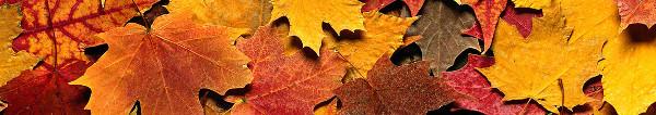 Herbstangebote bei Expedia