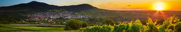 Wellness, Wandern und Weinprobe – entspannen Sie in den Weinregionen Pfalz, Mosel, Rheinhessen – 2 Hotelübernachtungen ab 69 Euro