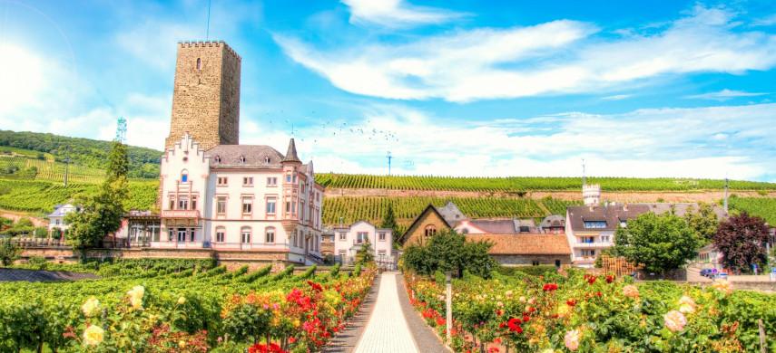 Traube Rüdesheim